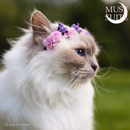 Crowns for cats