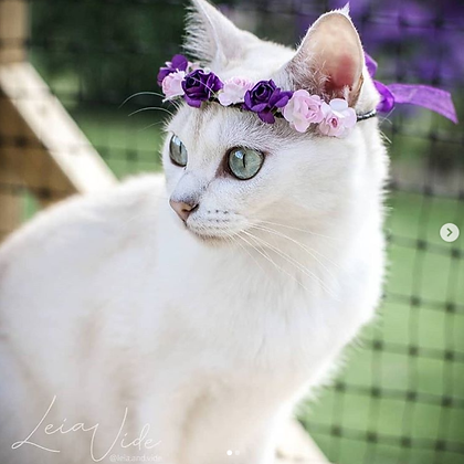 Purple Violet Cat Crown - Diadem for cats (and littledogs)