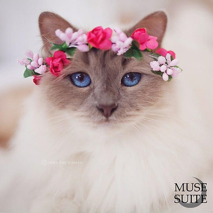 Cat crowns - diadem for cats - flower circlet for little pets - fuchsia and pink