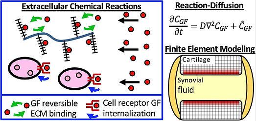 reaction-diffusion.JPG