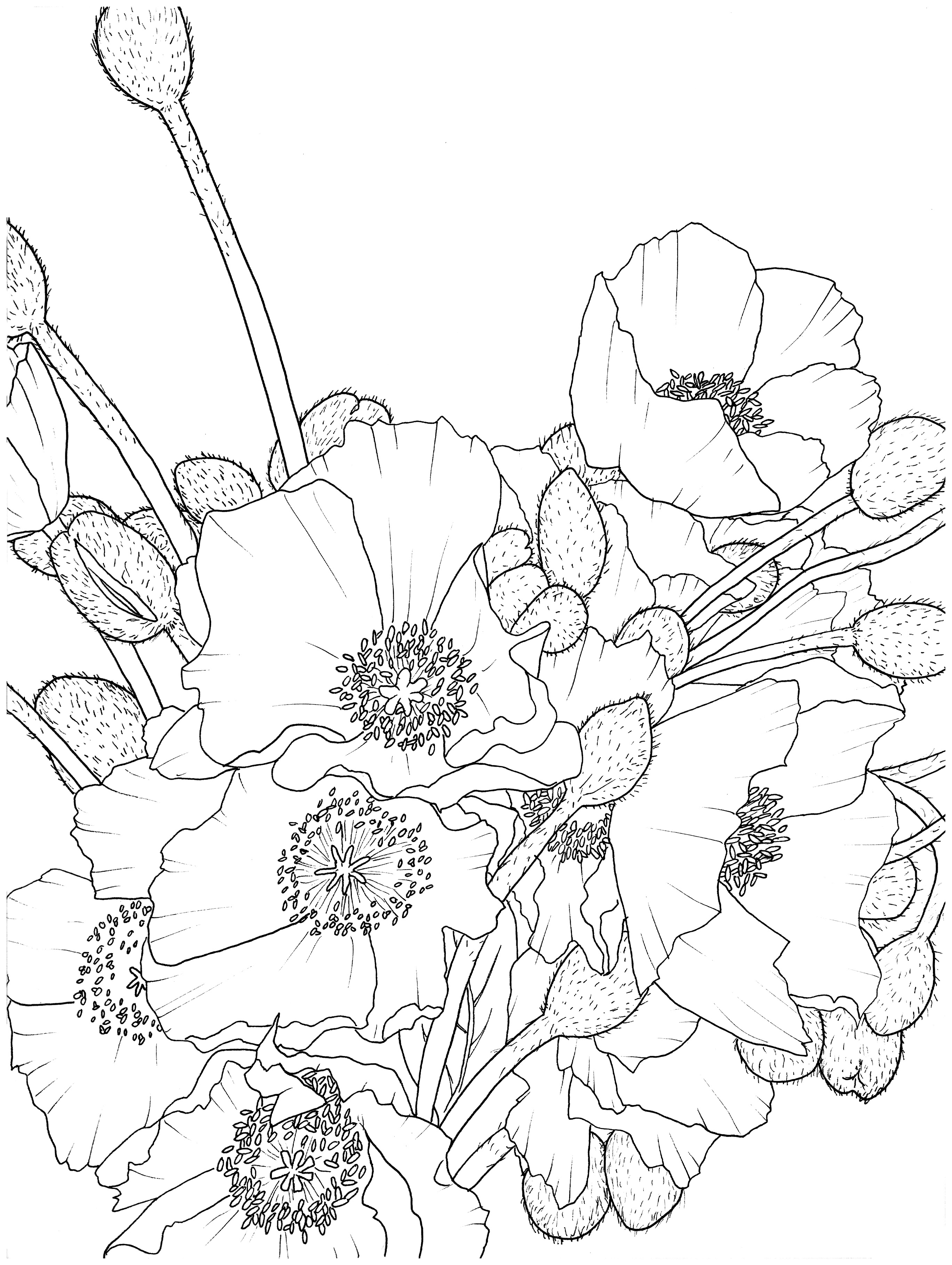 Poppies_and_Bulbs