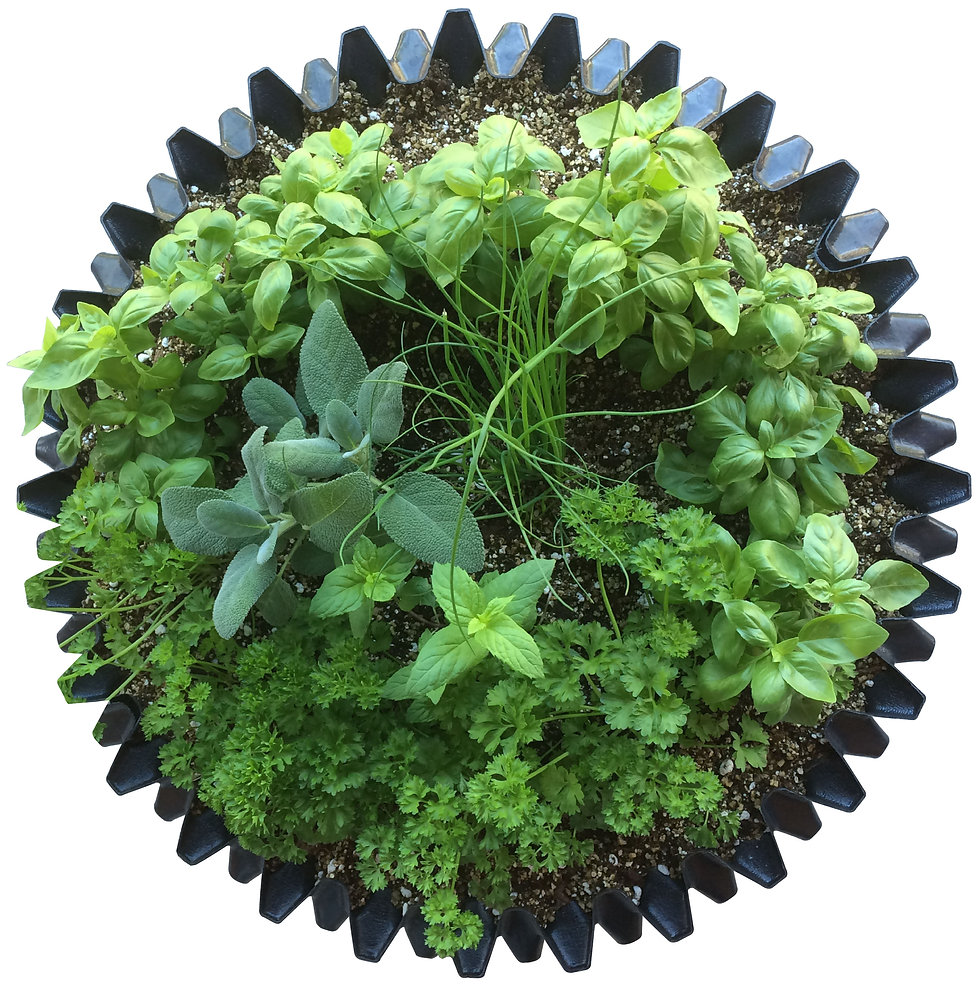 EZPOT%2020L%20(plants)-01_edited.jpg