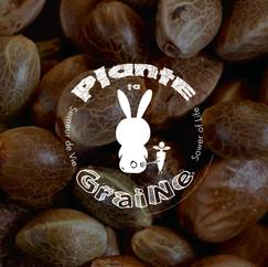 BRANDS PLANTE TA GRAINE-01.png