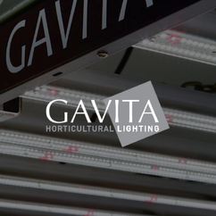 BRANDS GAVITA-01.png