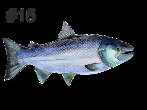 Fish # 15 by Trisha Oldfield