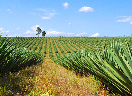 Sisal or Seagrass?