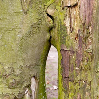 arbres qui s'embrassent.png