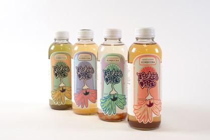 Bashful Daisy - Kombucha Branding