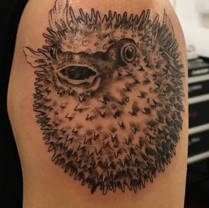 Pufferfish Tattoo