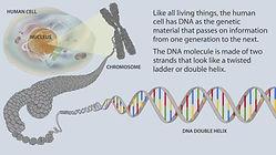 Dr. Kaufman - Chromosome 8 and the SARS-COV2 PCR test