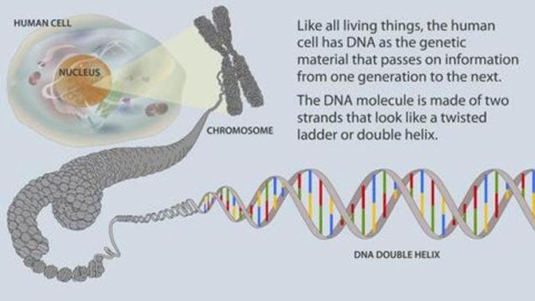 DR. KAUFMAN - CHROMOSOME 8 AND THE SARS-