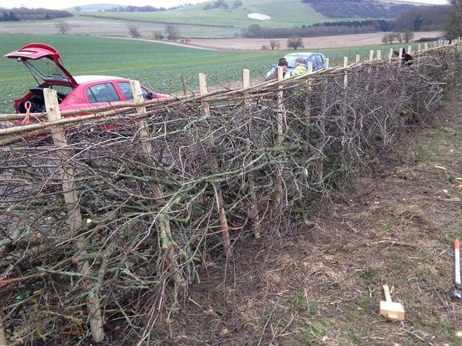 South of England style hedgerow by JJones SEHLS Competition 2018