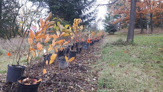 C. Multi-Species hedgerow at Mount Wolfe Farm (3)