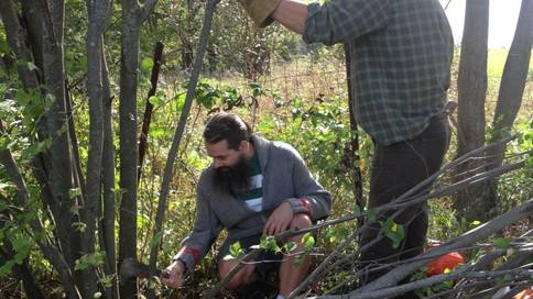 Nigel Adams from the UK demonstrates Hedgelaying techniques