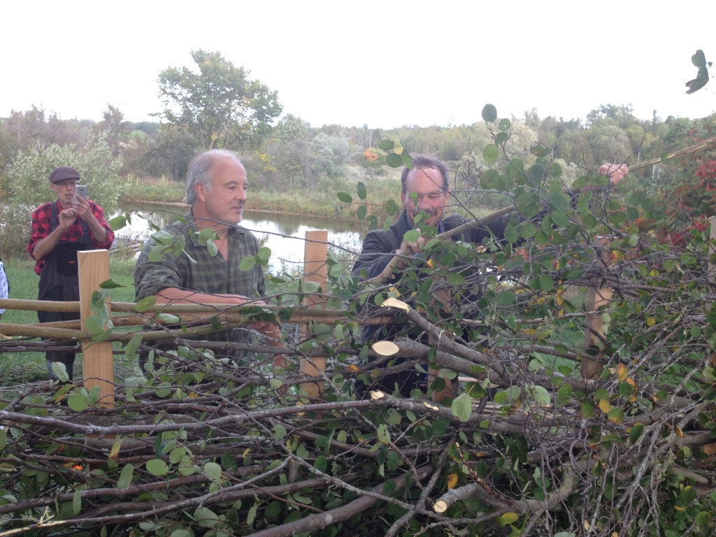 Nigel Adams from the UK and Jef Geilen from the Netherlands demonstrate Hedgelaying techniques