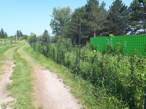 E. Hedge planing at Albion Hills Community Farm by TRCA with Deer Fncing