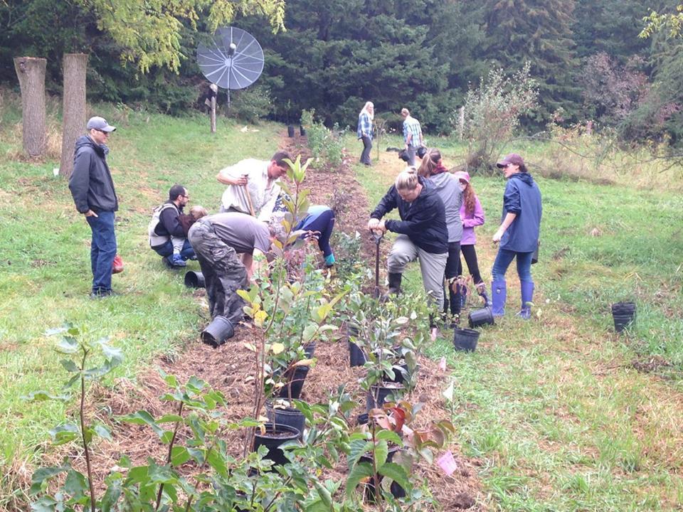 D. Community Hedgerow Planting