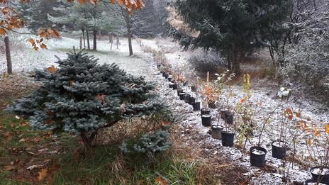 Winter Hedge 2018