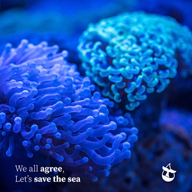 weall-coral.jpg