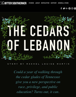 """The Cedars of Lebanon,"" Bitter Southerner"