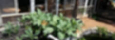 RS Project SPB Grow Together Aquaponics.