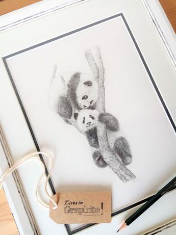 2 pandas (in frame).jpg