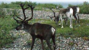 Sprudlende samarbejde i Arktis