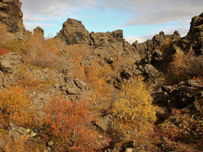 Skógviðarbróðir