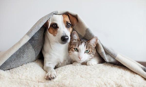 Alimentación de las mascotas en la cuarentena