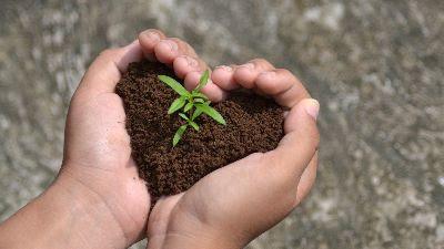 Seeds of the Kingdom