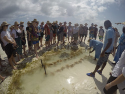 Seaweed tour ved lowtide