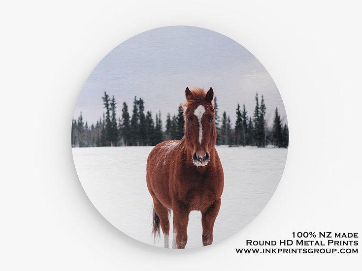 Horse Large Round HD Metal Print. M0010