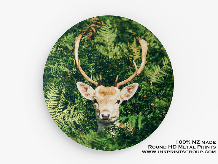 Green Large Round HD Metal Print. Forest. Deer M0004