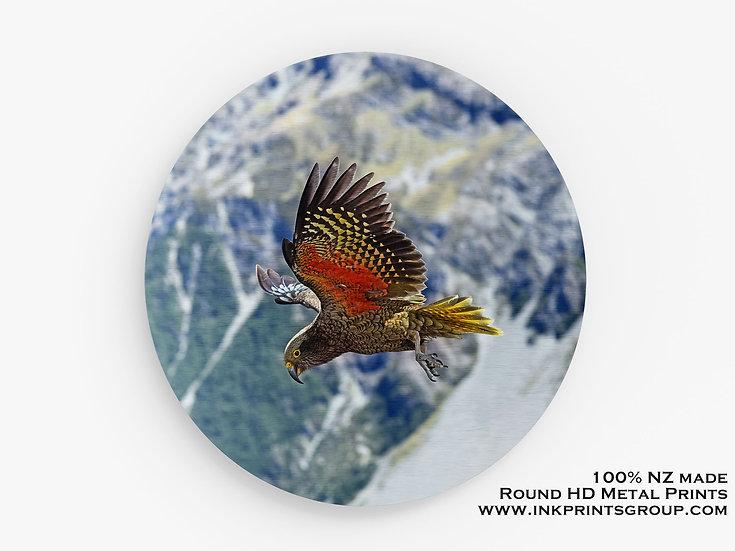 NZ Kea Large Round HD Metal Print. Bird M0011