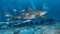 давив с акулами