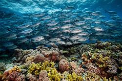 01-tubbataha-reef-philippines.jpg