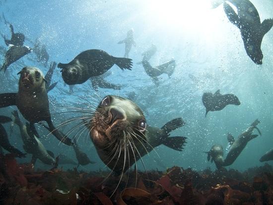 seal_snorkeling-animal_ocean.jpg