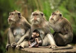 Семейство_в_зоопарке_Бали.jpg