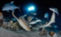 дайвинг с акулой-нянькой