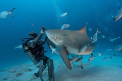 дайвинг с акулами в Мексике