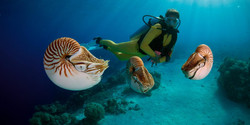 E5XRRB_diver-with-the-nautiluses-in-Pala