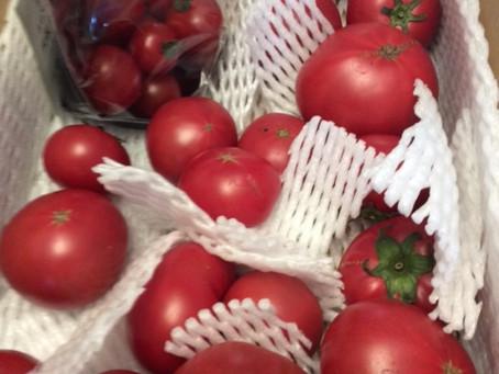 美味しい!トマトとの出逢い