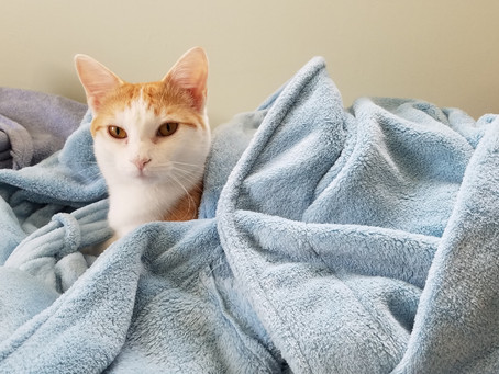 30 New Year Resolution Suggestions for Professional Pet Sitters