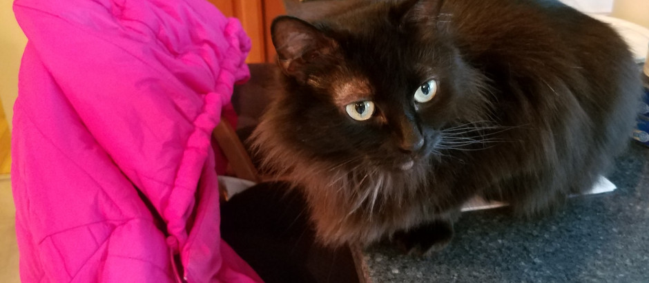 How pet sitting enhanced my life