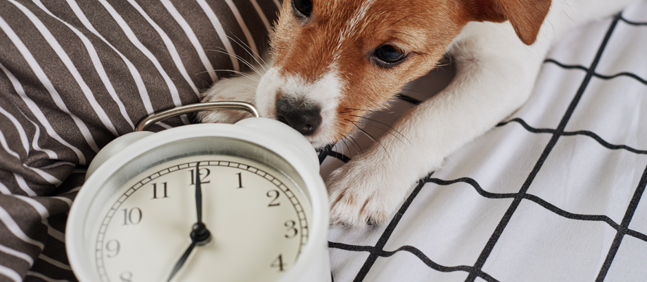 Time Management Tips for Pet Sitters