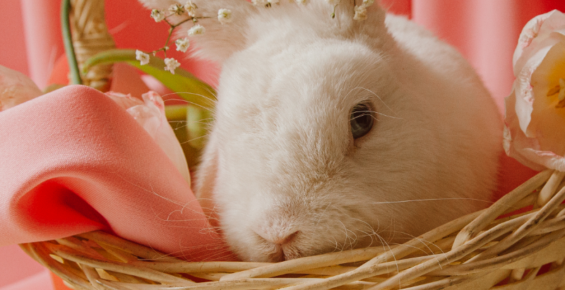 A Pet Sitter Interviews the Easter Bunny