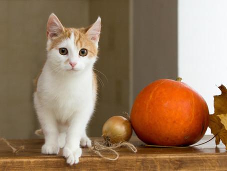 Halloween warnings for Pet Lovers
