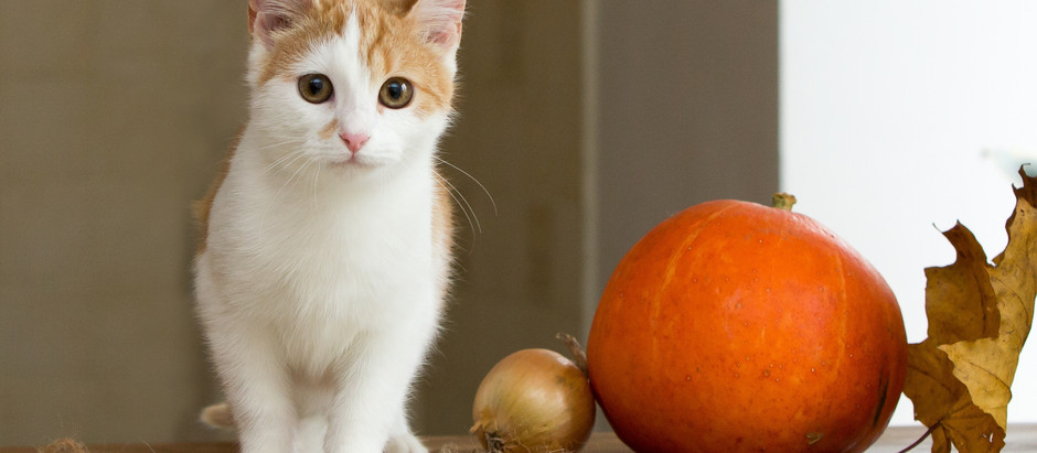 Halloween warnings for Pet Lovers
