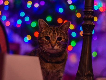 Pet sitters: 16 things to be mindful of  during this festive season