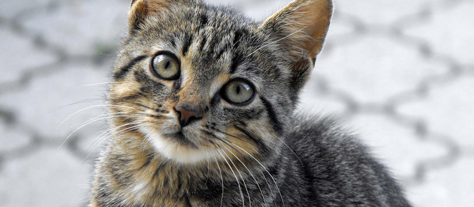 Cats or Criminals?